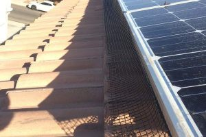 solar-panel-bird-netting-Tempe-AZ-2_5-300x200